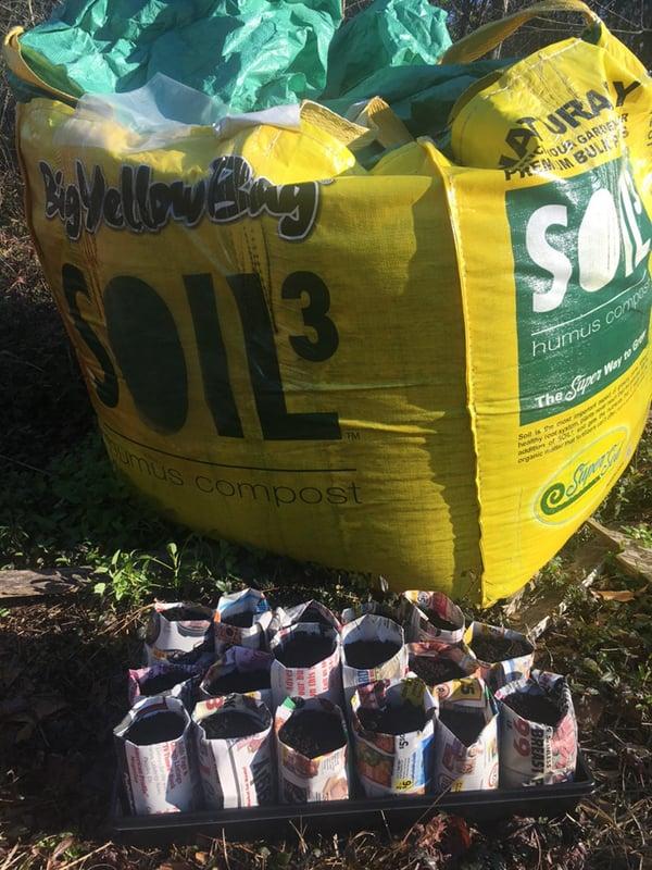 Seedlings direct seeded in Soil3 BigYellowBag