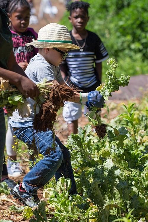 Soil Festival Kids Harvesting by Jennifer Girtman