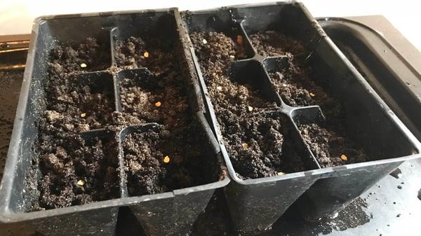 Starting seeds in Soil3