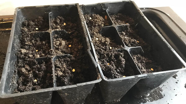 Starting seeds in Soil3