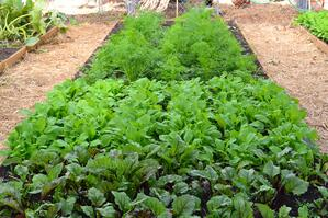 Learn about Fall Backyard Vegetable Gardening [video]