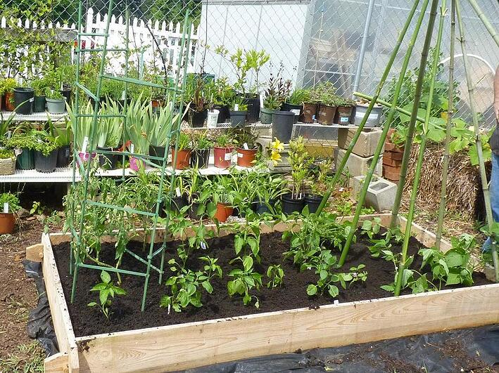 Smart Plant Placement Get The Most Out Of Your Raised Bed Garden