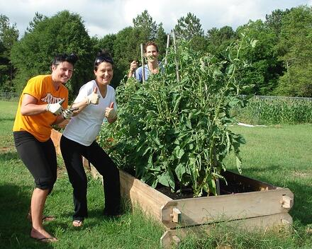doc's raised garden bed with tall plants.jpg