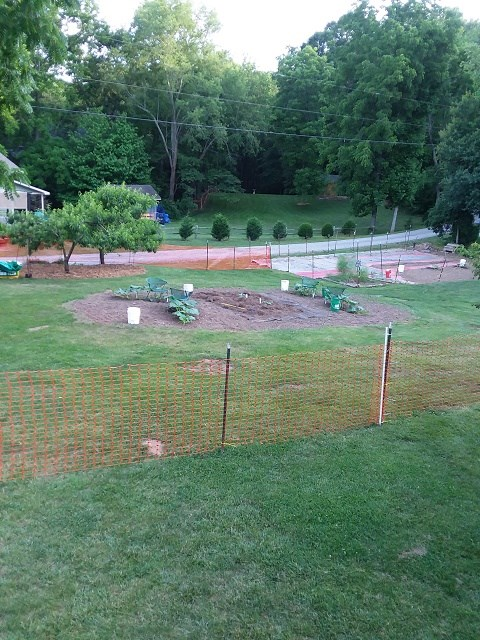early june plants are down and running.jpg