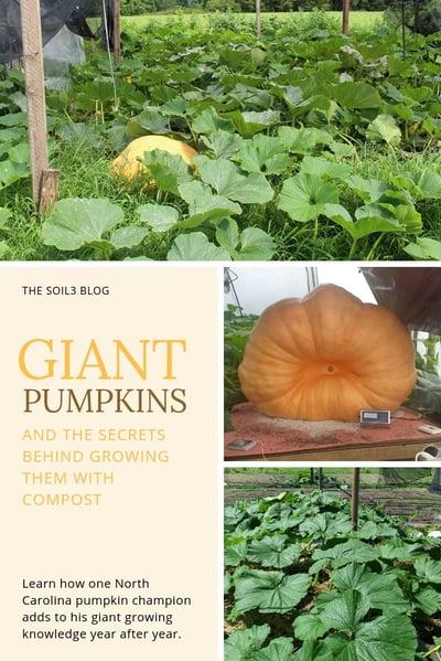 giant pumpkin growing secrets