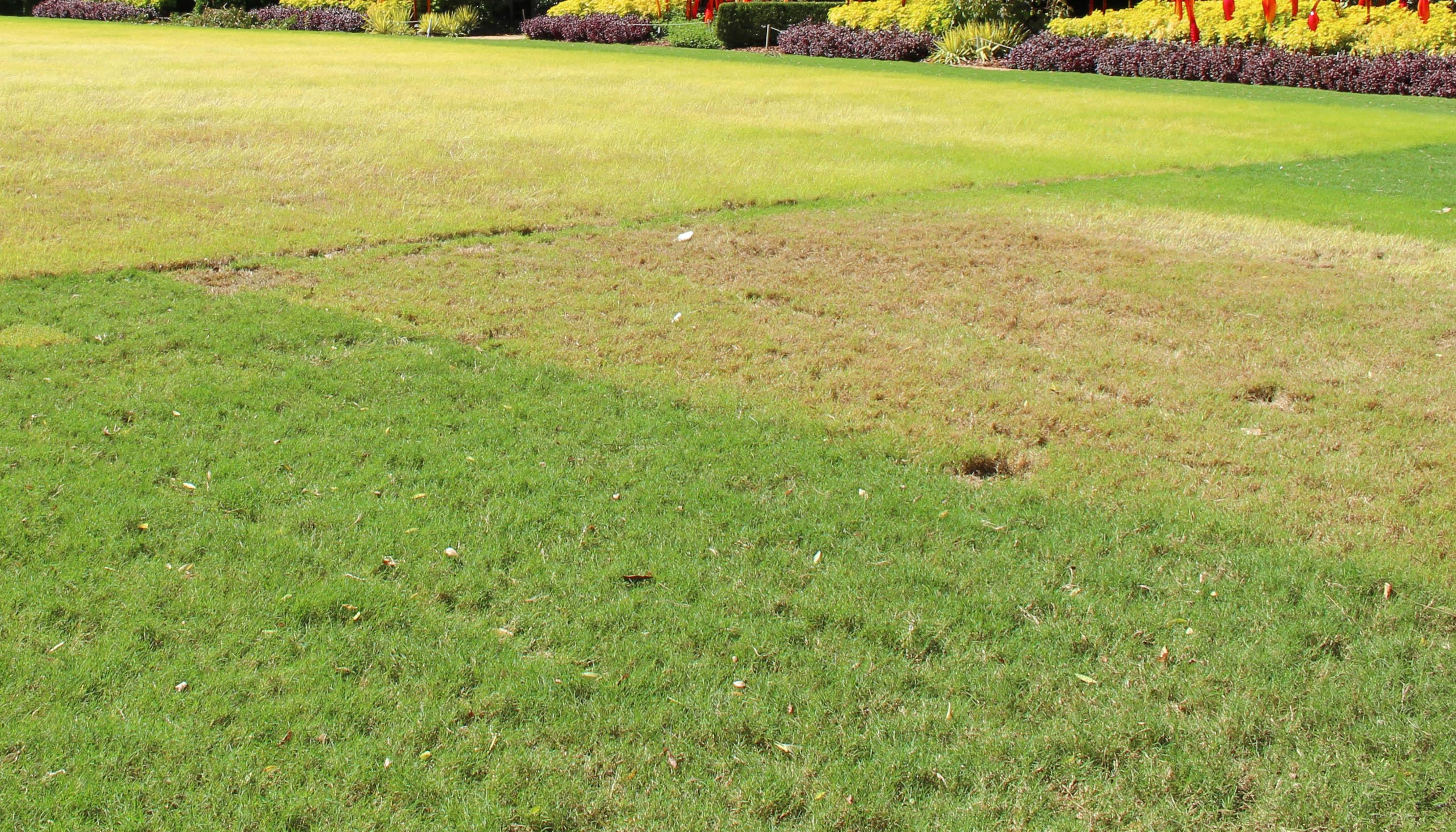 grass_under_tent.jpg