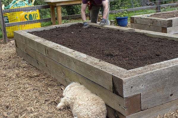 new compost in old garden beds