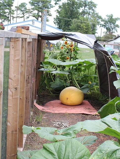 orange pumpkin under cover