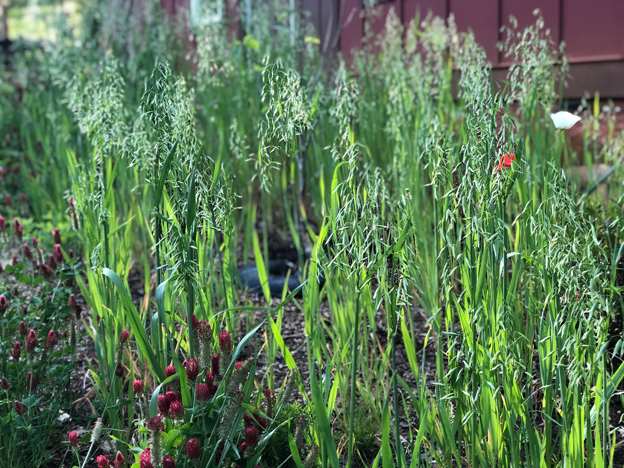 protect soil food web with cover crops