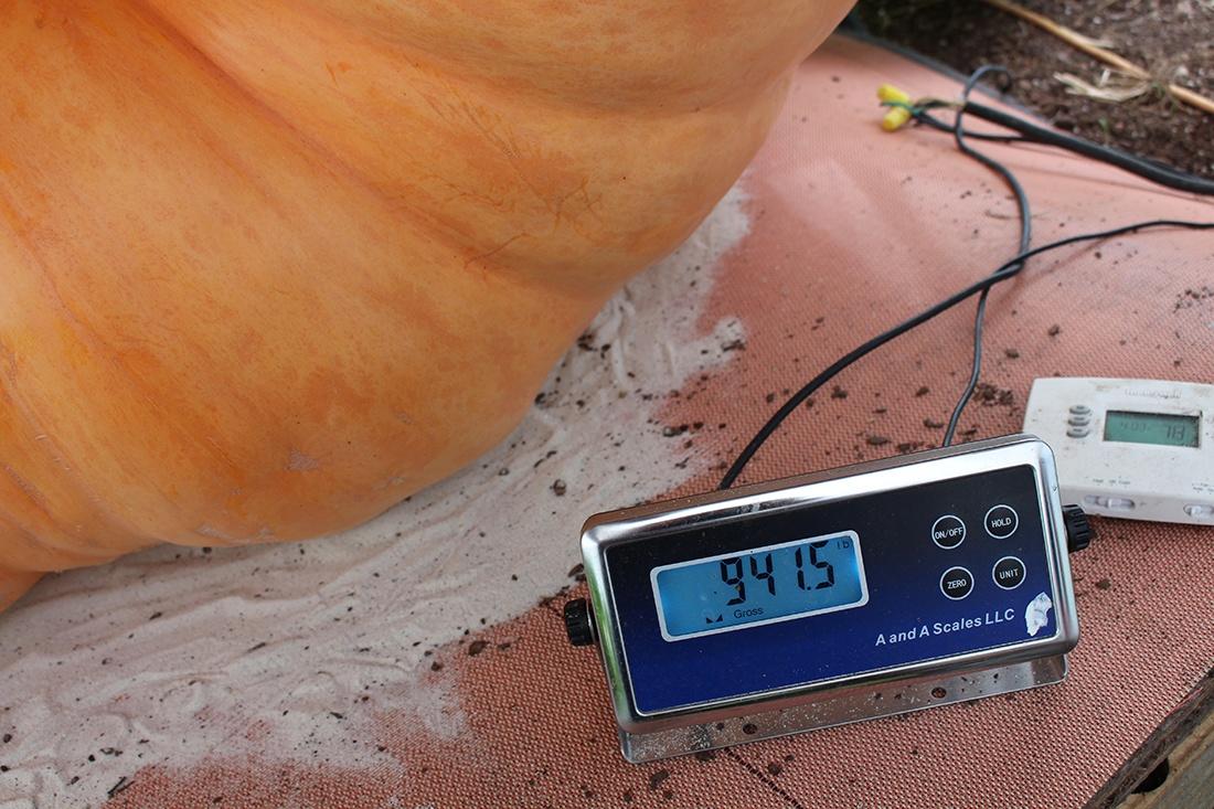 pumpkin scale close up