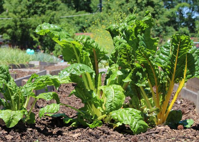 What to Know Before You Start Your First Vegetable Garden - featured image
