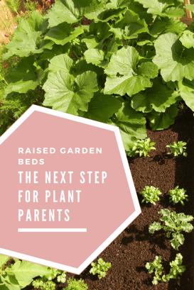 raised garden beds.png