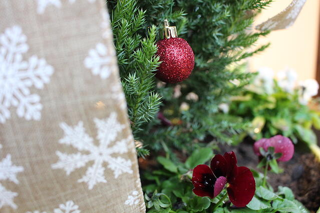 Container Evergreens for Front Porch Christmas Decor - featured image