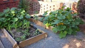 Raised Garden Beds: The next step for plant parents - featured image