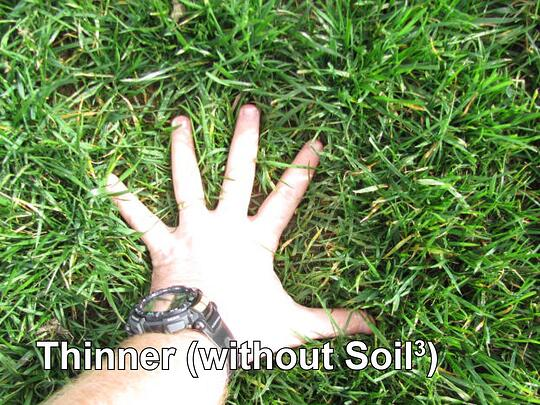 topdressing-grass-seed-turf-sod-fescue-lawn-without-compost