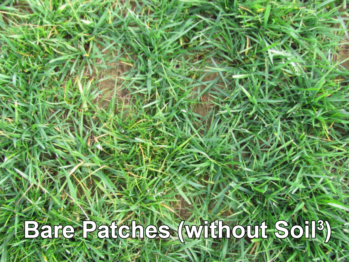 topdressing-grass-seed-turf-sod-fescue-lawn-without-compost2