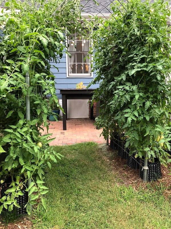 Soil3_tomatoes_RootBuilder