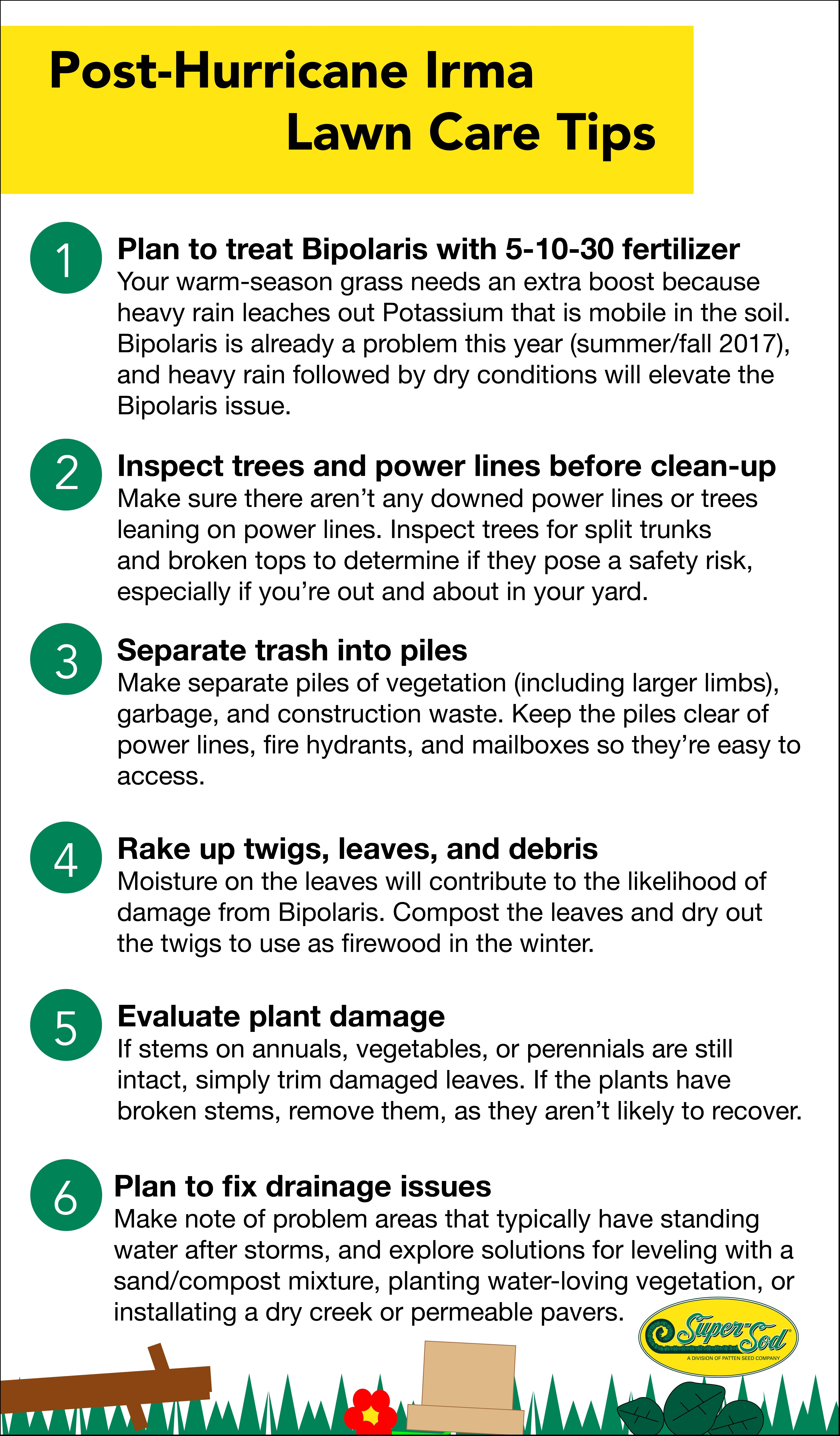 Post-Storm Lawn Cleanup & Care - featured image