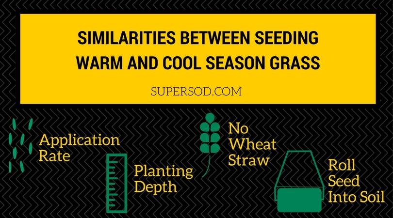 4 Similarities Between Seeding Warm-Season Grass and Cool-Season Grass - featured image