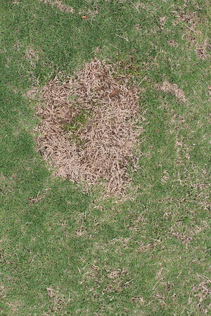 Patching Your Lawn with Warm Season Grass Seed (Video) - featured image