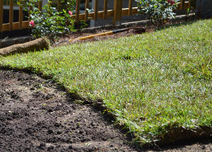 Questions to Ask During Your First Growing Season with a New Lawn - featured image