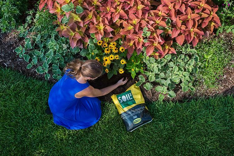brie plants soil3