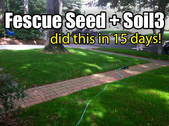Fescue seed and soil3