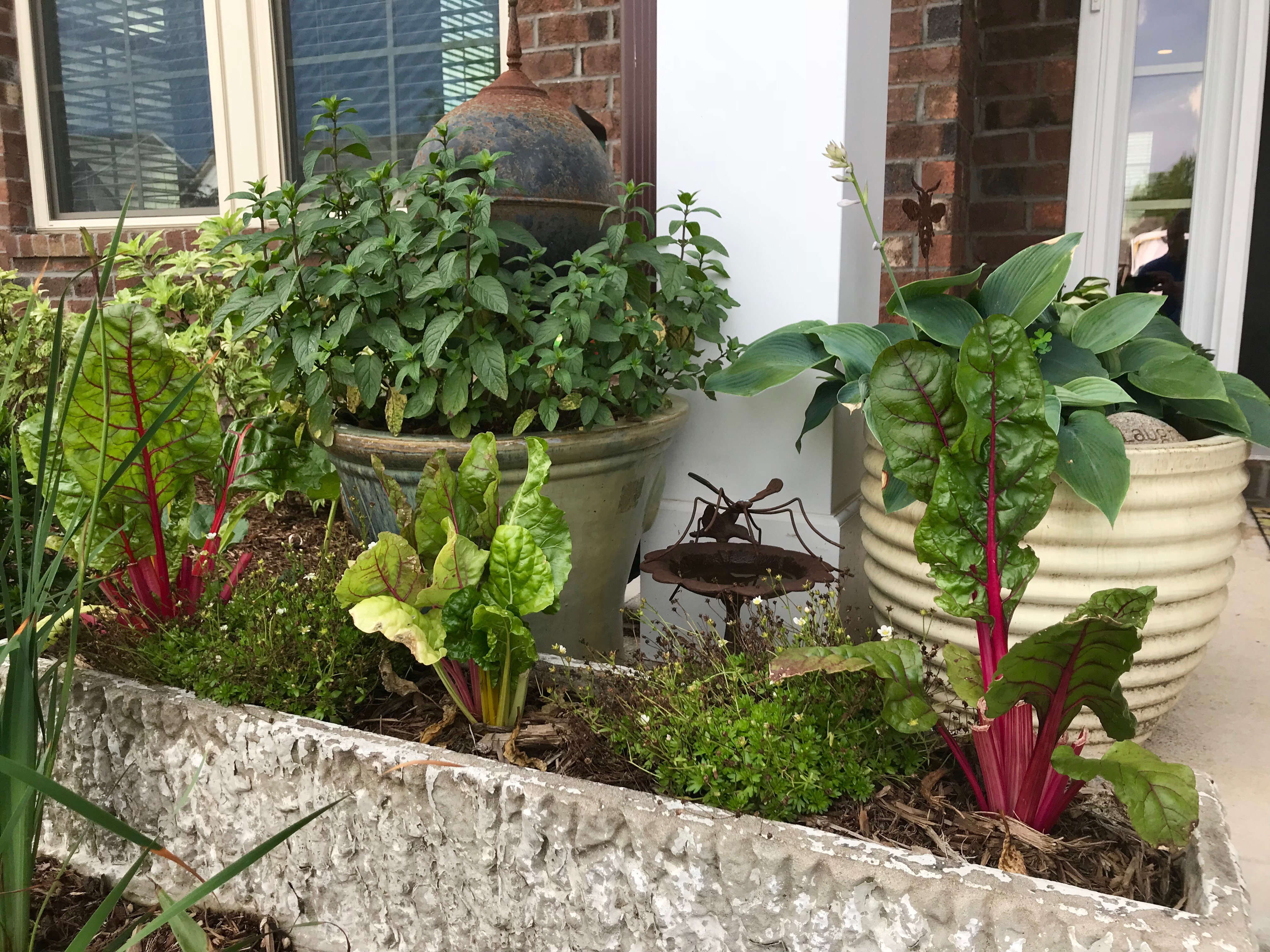 Flower Pot Soil for Container Flower Gardening - featured image