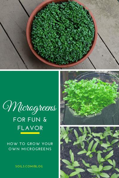 Microgreens Soil3 Blog