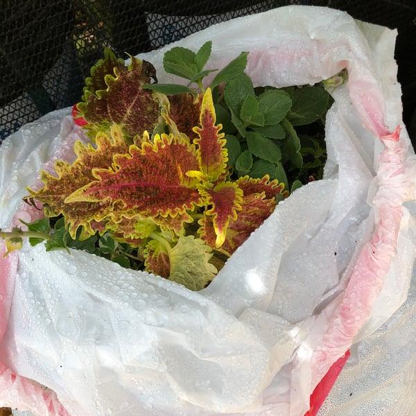 plantinbag