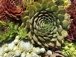 Sizzling Succulents - Tips for Growing Success