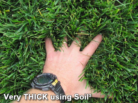 topdressing-grass-seed-turf-sod-lawn-with1a