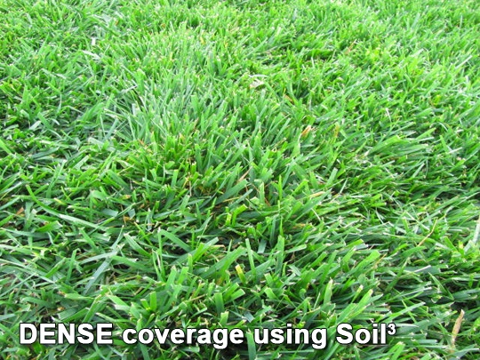 Grass after using compost as topdressing