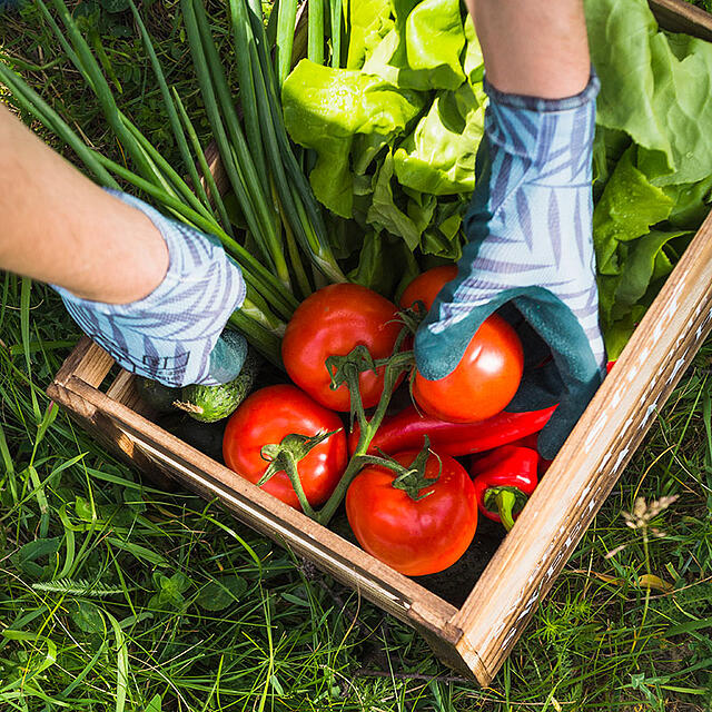 Gardening with Sharing in Mind - featured image