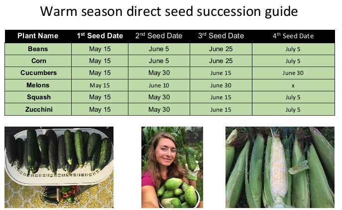 warm season direct seed succession planting