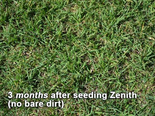 Zenith Zoysia Grass Seed 3 Months